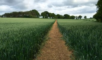 Path through wheat field